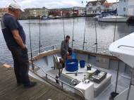 Johan deliver Fresh mackerel